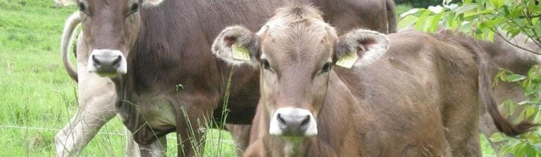 Viehzucht in verschiedenen politischen Systemen