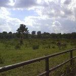 Urwildpferde im Tennenloher Forst